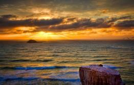 Sunset For Gannets